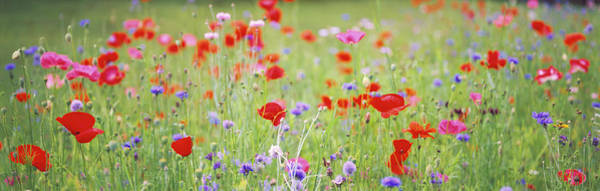 Wall Art - Photograph - Flowers In Field by Panoramic Images