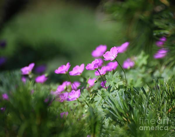Photograph - Flowers In The Garden by Kerri Farley