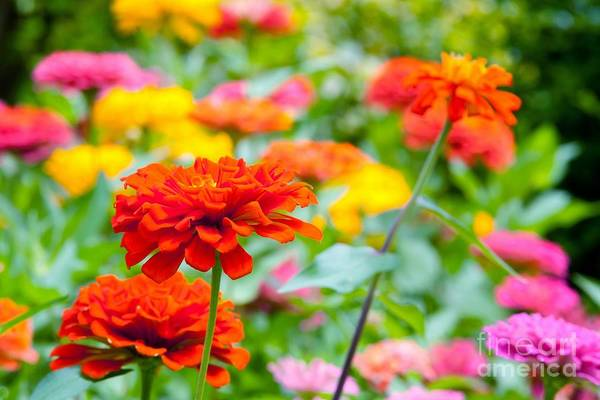 Wall Art - Photograph - Flowers In The Garden by Tonanakan