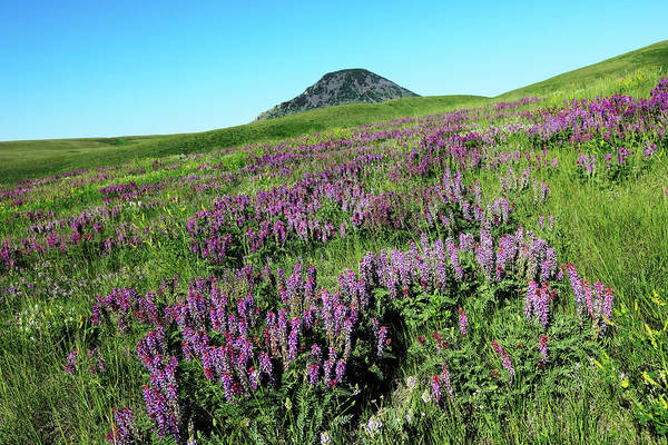 Photograph - Flowers In The Sweet Grass Hills by Todd Klassy
