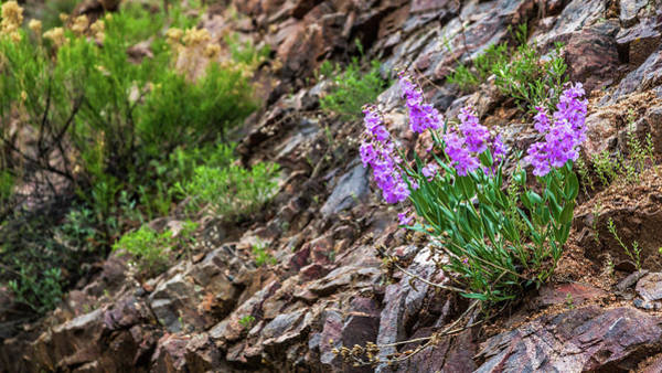 Photograph - Flowers In Waterton Canyon by Jeanette Fellows