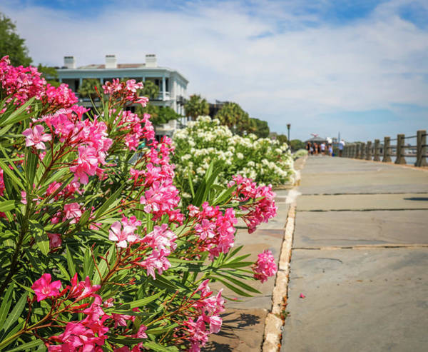 Photograph - Flowers On The Battery by Dan Sproul