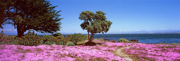Wall Art - Photograph - Flowers On The Beach, Pacific Grove by Panoramic Images