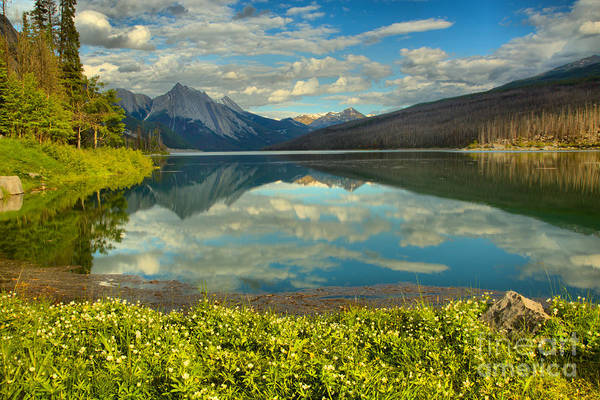 Photograph - Flowers On The Edge Of Medicine Lake by Adam Jewell