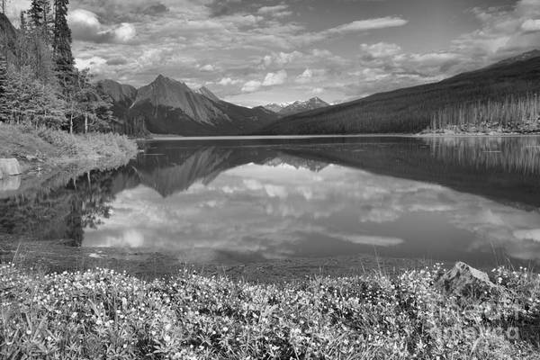 Photograph - Flowers On The Edge Of Medicine Lake Black And White by Adam Jewell
