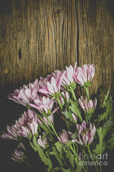Wall Art - Photograph - Flowers Over Wood by Edward Fielding