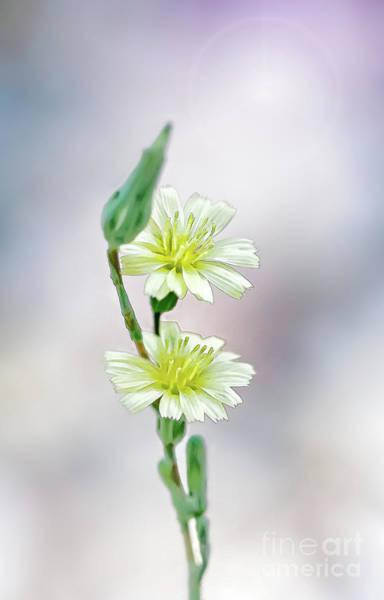 Photograph - Flowers Too by Susan Warren