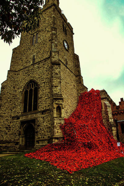 Photograph - Flowing Poppies by Perggals - Stacey Turner