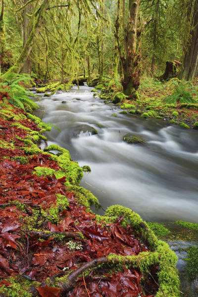 Vancouver Island Photograph - Flowing Through Life by Glowingearth