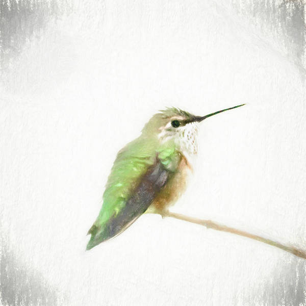 Photograph - Fluffy Hummingbird by Jennifer Grossnickle