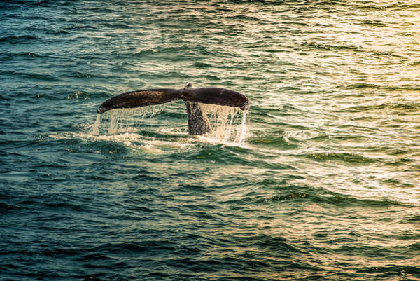 Photograph - Fluke Wave by Thomas Gaitley