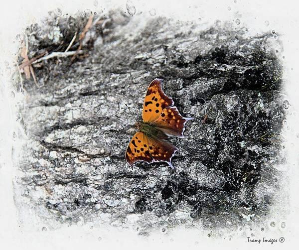 Photograph - Flutter by Wesley Nesbitt