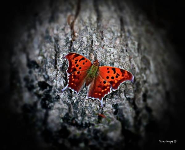 Photograph - Flutterfly by Wesley Nesbitt