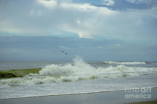 Photograph - Fly Above The Surf by Amy Lyon Smith