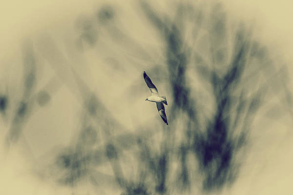Wall Art - Photograph - Fly Away II by Hyuntae Kim