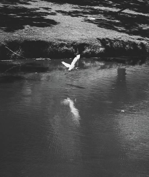 Wall Art - Photograph - Fly Away Xx by Hyuntae Kim