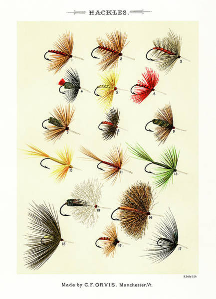 Drawing - Fly Fishing Lures 1 by David Letts