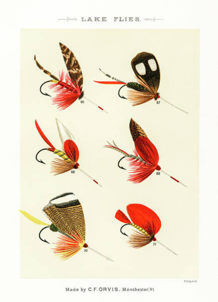 Drawing - Fly Fishing Lures 10 by David Letts