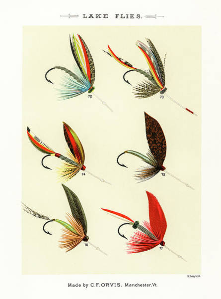 Drawing - Fly Fishing Lures 11 by David Letts