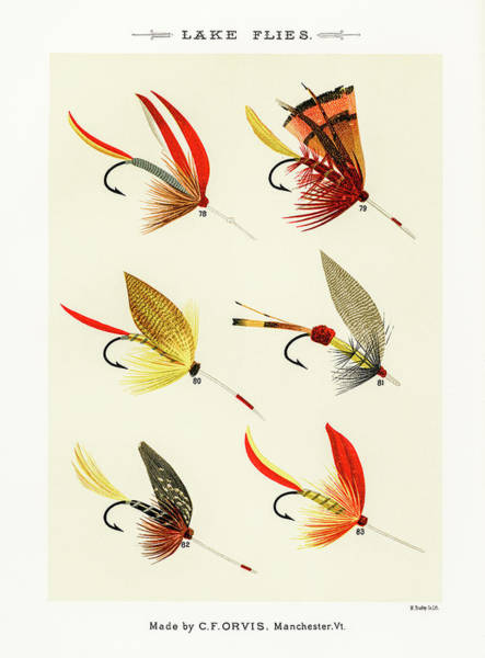 Drawing - Fly Fishing Lures 12 by David Letts