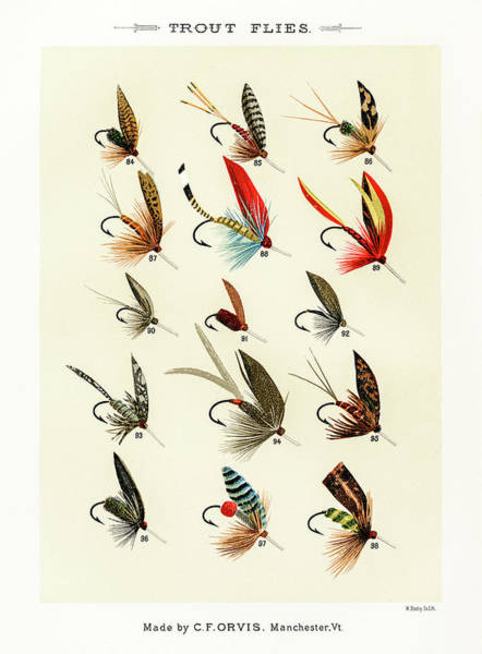 Drawing - Fly Fishing Lures 13 by David Letts