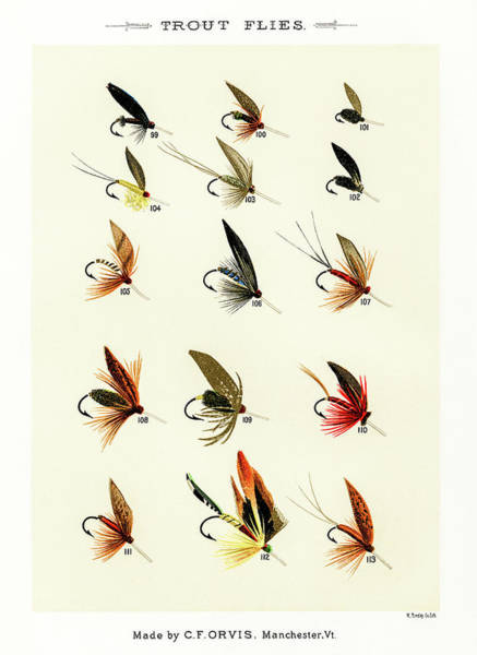Drawing - Fly Fishing Lures 14 by David Letts
