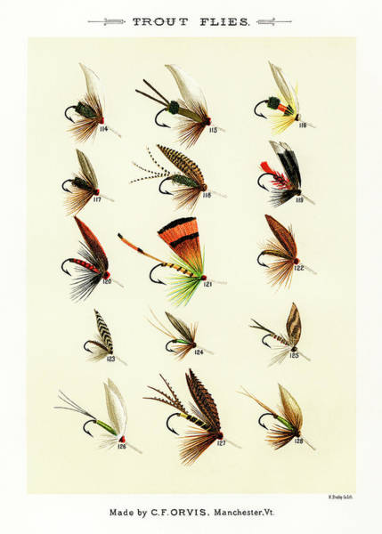 Drawing - Fly Fishing Lures 15 by David Letts