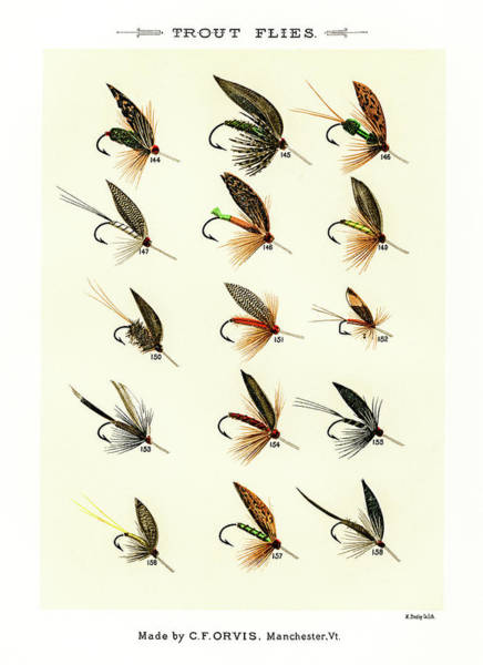 Drawing - Fly Fishing Lures 17 by David Letts