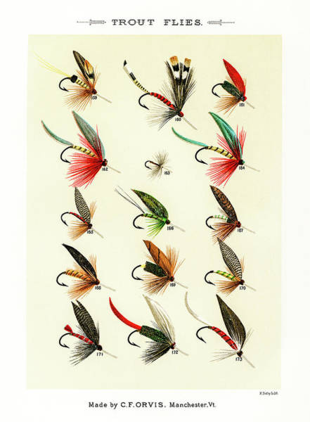 Drawing - Fly Fishing Lures 18 by David Letts