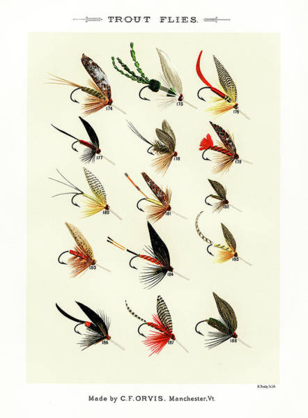 Drawing - Fly Fishing Lures 19 by David Letts