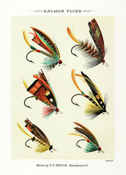 Drawing - Fly Fishing Lures 2 by David Letts