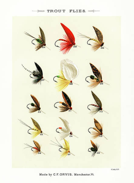Drawing - Fly Fishing Lures 21 by David Letts