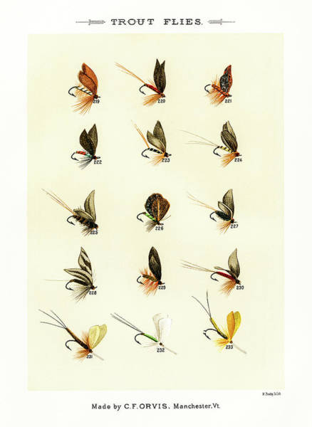 Drawing - Fly Fishing Lures 22 by David Letts