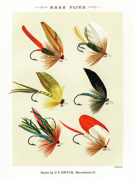 Drawing - Fly Fishing Lures 23 by David Letts
