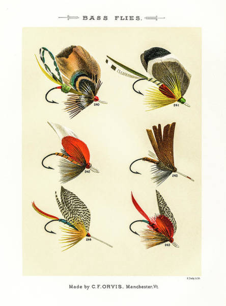 Drawing - Fly Fishing Lures 24 by David Letts