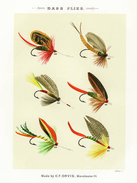 Drawing - Fly Fishing Lures 25 by David Letts