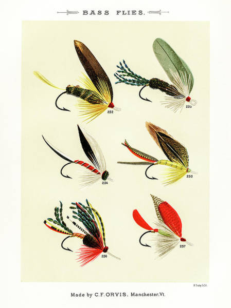 Drawing - Fly Fishing Lures 26 by David Letts