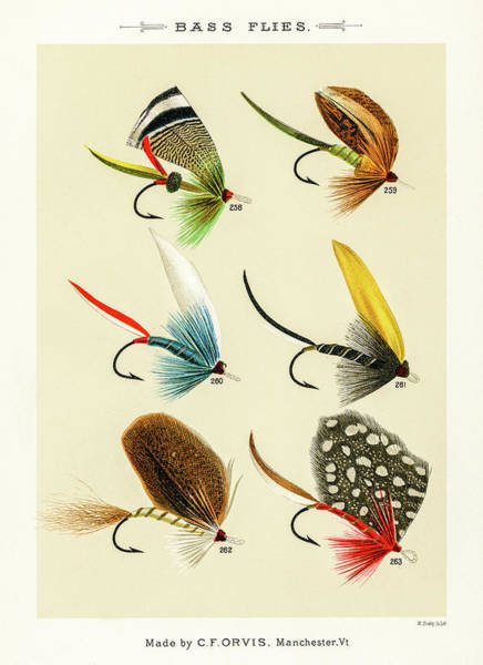 Drawing - Fly Fishing Lures 27 by David Letts