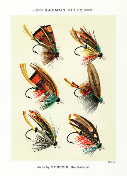 Drawing - Fly Fishing Lures 3 by David Letts
