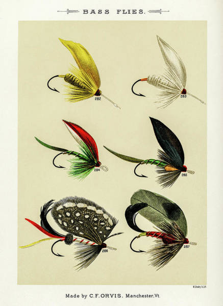 Drawing - Fly Fishing Lures 31 by David Letts