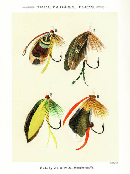 Drawing - Fly Fishing Lures 32 by David Letts