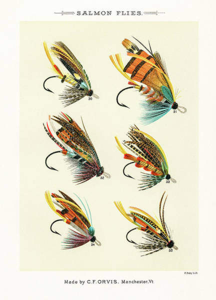 Drawing - Fly Fishing Lures 4 by David Letts