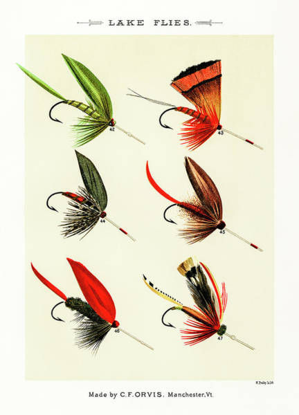 Drawing - Fly Fishing Lures 6 by David Letts