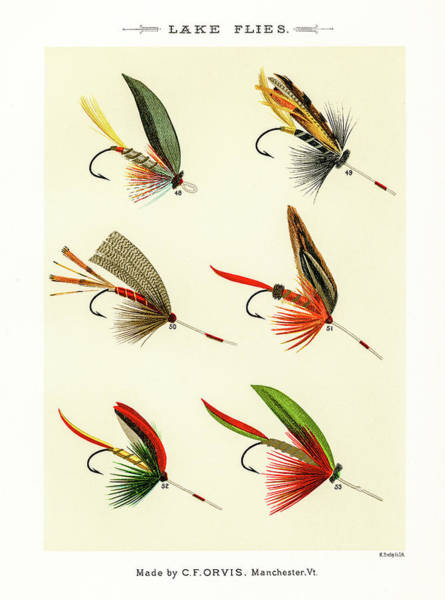 Drawing - Fly Fishing Lures 7 by David Letts