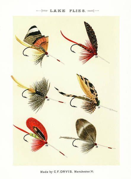 Drawing - Fly Fishing Lures 8 by David Letts
