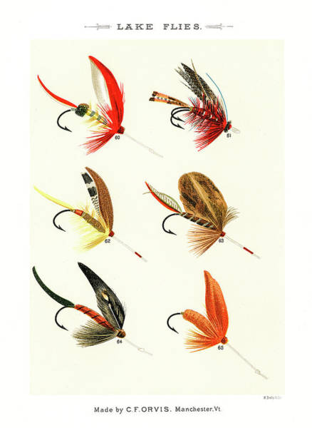 Drawing - Fly Fishing Lures 9 by David Letts