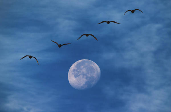 In Flight Photograph - Fly Me To The Moon by Darren White