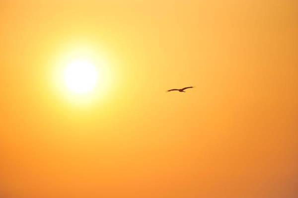 Kamakura Wall Art - Photograph - Fly To The Sun by Taro Hama @ E-kamakura