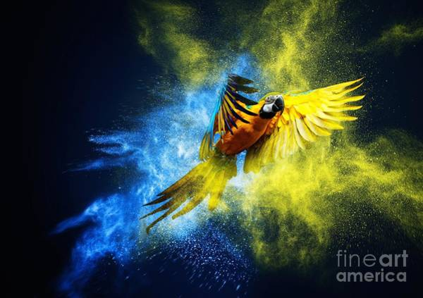 Wall Art - Photograph - Flying Ara Parrot Over Colourful Powder by Nejron Photo