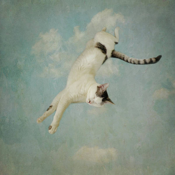Photograph - Flying Cat by Sally Banfill